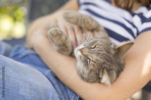 Fotomural Pet cat enjoying the cuddling