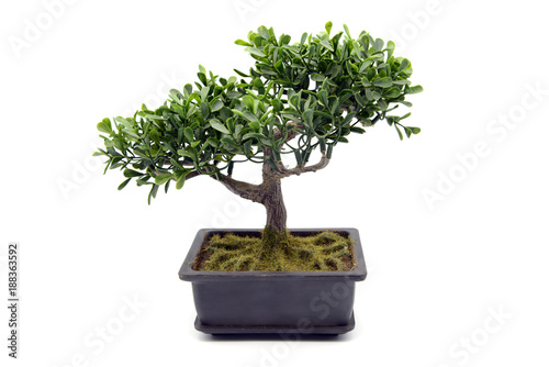 Deurstickers Bonsai potted bonsai tree at white isolated background