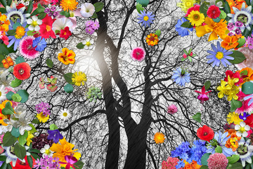 Fototapeta Ogrody Winter Tree and Colorful Spring Flowers