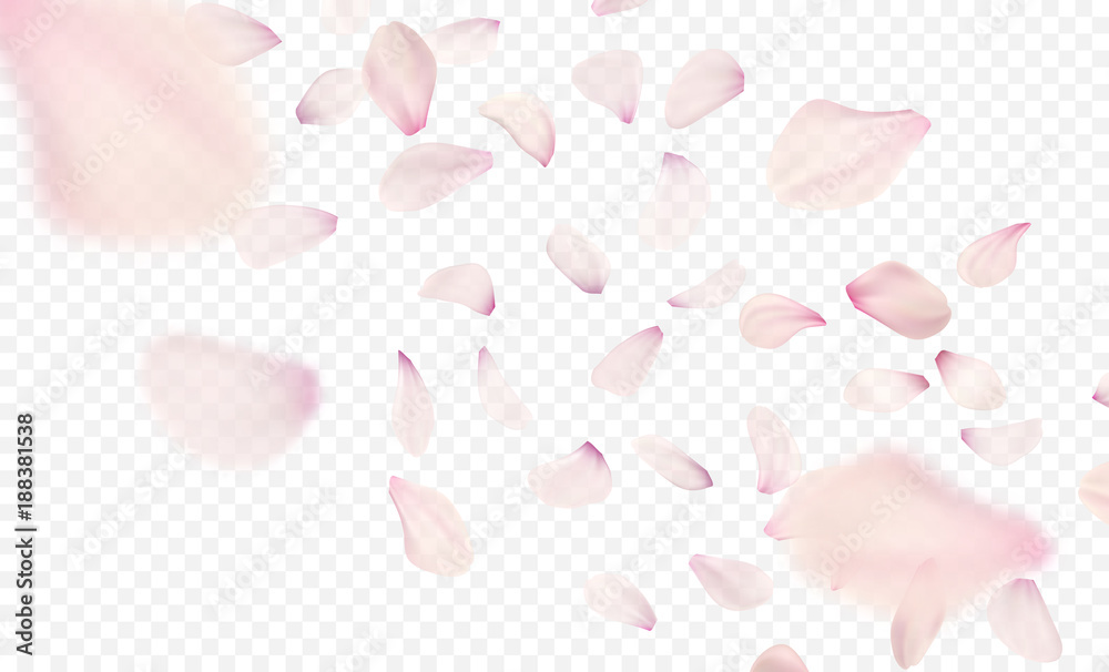 Fototapeta Pink sakura falling petals background. Vector illustration