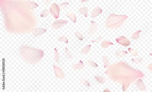 Fotografie, Obraz Pink sakura falling petals background. Vector illustration