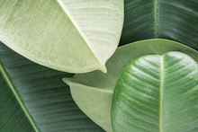 Green Tropical Background With...