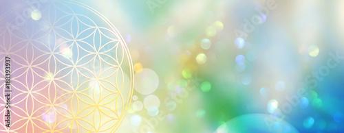 Banner Blume des Lebens in einem Lichtermeer aus Regenbogenfarben Fototapete