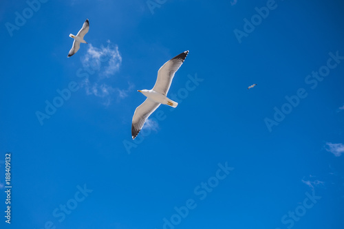 Deurstickers Vogel Low angle view of birds flying against blue sky