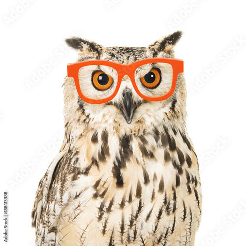Portrait of an eagle owl with orange glasses