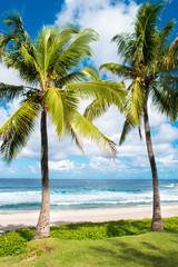 Obraz na Szkle Drzewa Plage, île, cocotiers