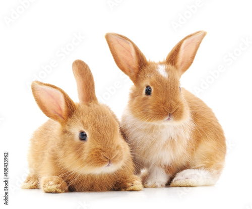 Two small rabbits. Fotobehang