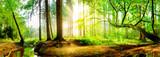 Fototapeta Las - Idyllic forest with brook at sunrise