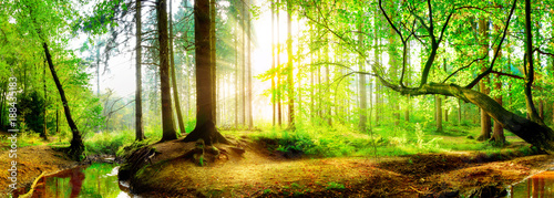 Photo Stands Lime green Idyllic forest with brook at sunrise