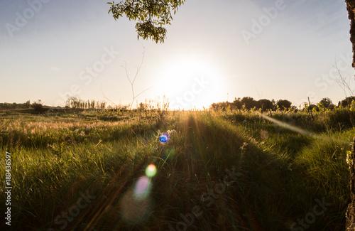 Cuadros en Lienzo Couché de soleil en contre-jour à la campagne