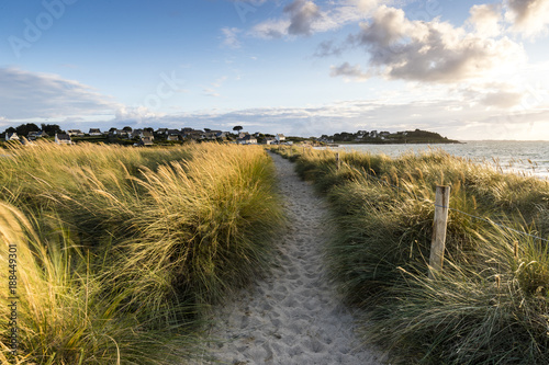 Tuinposter Gras Sandy path in grass at sunset in Brittany, Sillon de Talbert, France