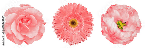 Deurstickers Gerbera 3 surreal exotic high quality gold flowers macro isolated on white. Greeting card objects for anniversary, wedding, mothers and womens day design