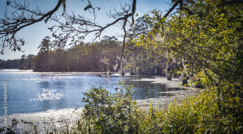 Fényképezés  Stagnant Swamp