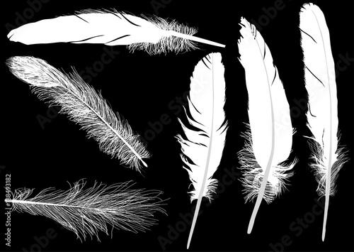 sześć puszystych białych piór na czarnym tle
