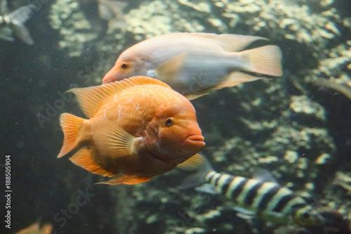 Plakat akwarium morskie w Hradec Králové w Republice Czeskiej