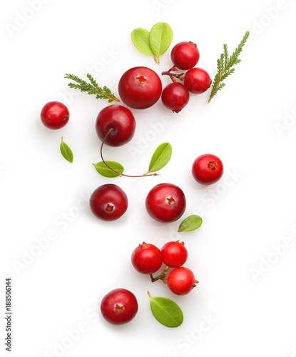 Fresh forest berry cranberry