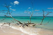 Driftwood on Cayo Jutia beach in Cuba