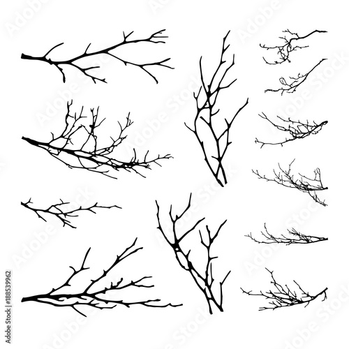 Photo Realistic set of tree branches silhouette (Vector illustration)ai10