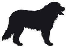 Bernese Mountain Dog - Vector Black Silhouette Isolated
