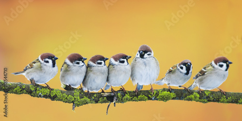 Photo  lot of little funny birds sitting in a bright Sunny spring Park