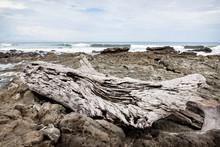 Gray Driftwood At Rocky Beach ...