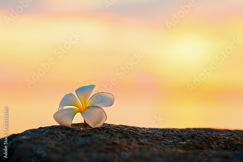Tuinposter Frangipani Plumeria flower on the rock of the beach at sunset,relaxing concept.