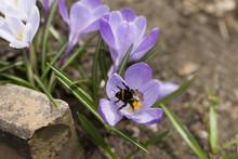 Wild Flower With Purple Petals