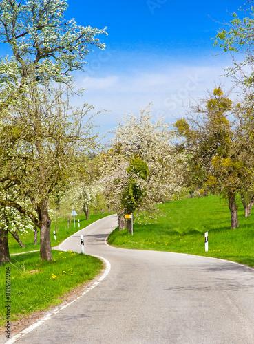 Zdjęcie XXL Droga na wiosnę - Jezioro Bodeńskie, w pobliżu Haldenhof