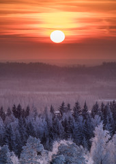 Fototapeta Las Winter landscape with frosty trees and beautiful sunset at evening time in Finland