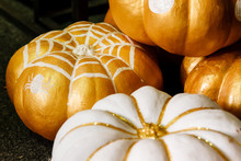 Beautiful Painted Pumpkins Of ...