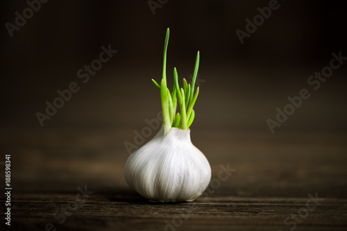 Garlic germinated