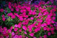 Compo Fleur Rouge