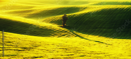 Poster Jaune hilly field. spring morning. a beautiful sunrise in the field