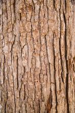 Close Up Of Tree Bark Texture