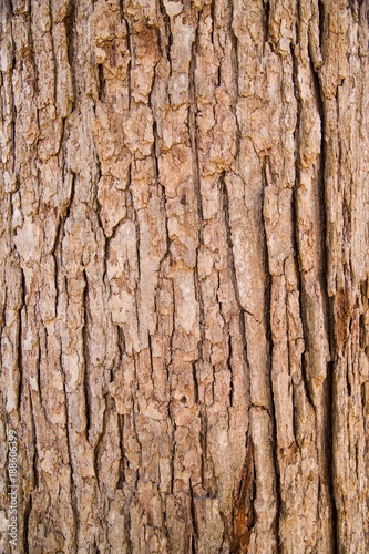Close up of tree bark texture Canvas Print