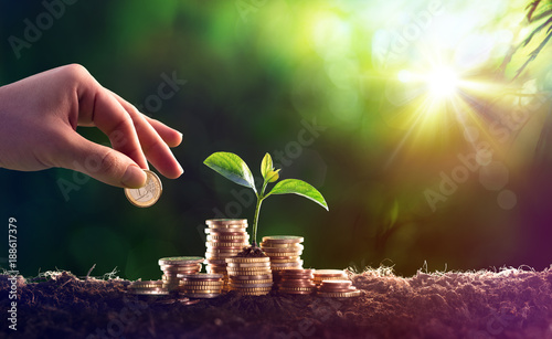 Cuadros en Lienzo  Plant Growing In Savings Coins Money - Investment Concept
