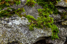 Stones Covered With Moss. Old ...