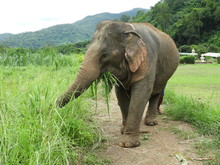 Elephant From Animal Sanctuary...