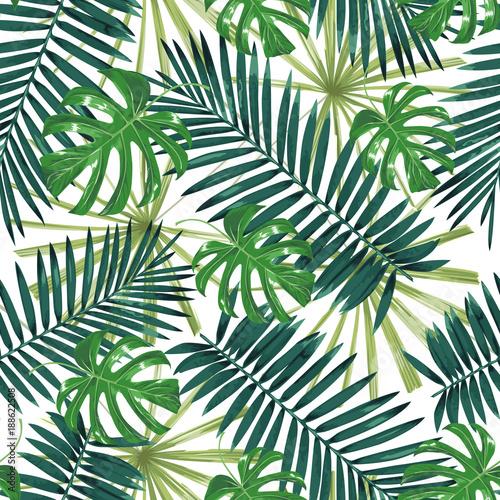 Fototapeta liście   zielone-liscie-bananowca