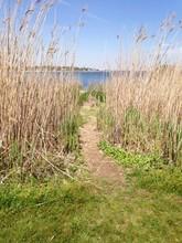 Path To The Ocean Through The ...