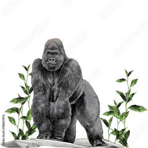 Photo a gorilla stands on all fours on the stone in the grass with leaves sketch vecto