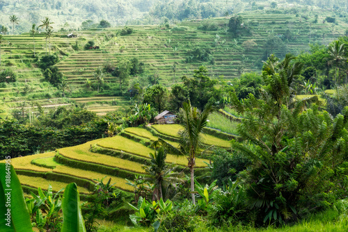 Foto auf Gartenposter Reisfelder Rice fields in the Balinese highland. Jati Luwih rice terraces, Bali, Indonesia.