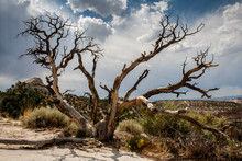 Tree In The Badlands