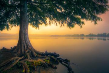 Fototapeta Drzewa Rising