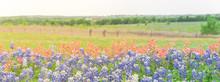Panorama View Colorful Wildflo...