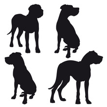 Great Dane - Vector Black Dog Silhouette Set Isolated