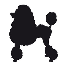 Miniature Poodle - Vector Black Dog Silhouette Isolated