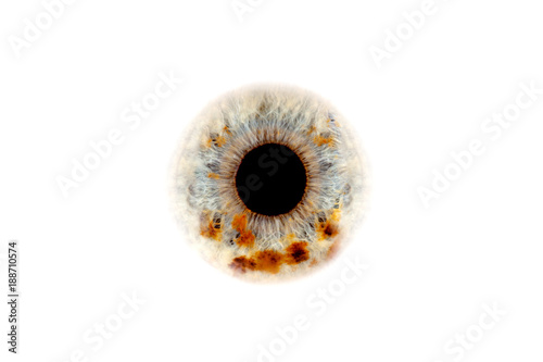 Foto auf AluDibond Iris human eye close-up