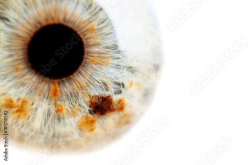 Spoed Foto op Canvas Iris human eye close-up