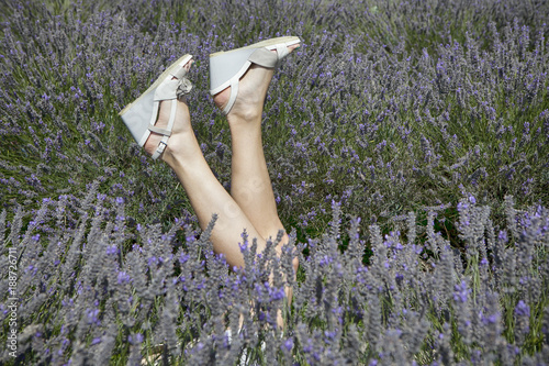 Photo  field of lavender at Mayfield Lavender farm on the Surrey Downs The legs of a gi